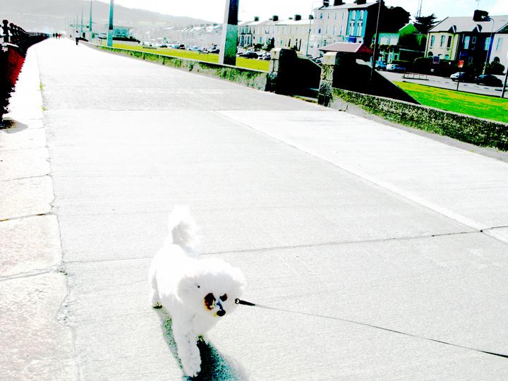 bray promenade dog